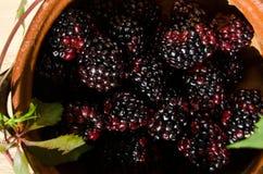 Macro blackberry. Fruit Royalty Free Stock Photos