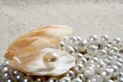Macro blanca de la almeja del shell de la perla de la arena de la playa Fotos de archivo