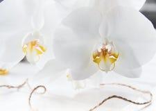 Macro blanca hermosa de la orquídea dos Fotografía de archivo