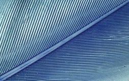 Macro bleu de plume Images libres de droits