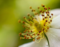Macro bloeiende bloem royalty-vrije stock foto's