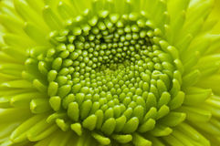 Macro bloeiende bloem Stock Foto's