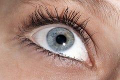Eye Looking Up-Left Stock Image