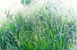 Macro Bokeh da grama verde Imagens de Stock Royalty Free
