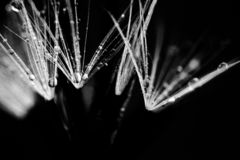 macro, bokeh, insect, mammals, nature, flowers, black and white stock photography