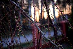 Macro branch and sunset background Stock Photo
