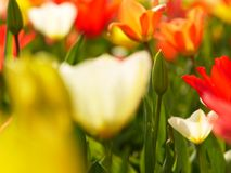 Macro of bright flowers Stock Photo