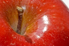 Macro of bright red apple's stem royalty free stock images