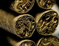 Macro of brown dry cigarettes or cigarillo as addiction concept Royalty Free Stock Images