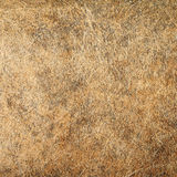 Macro of brown paper texture for background Royalty Free Stock Photo