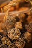 Macro of brown pinecorns with basket Royalty Free Stock Image