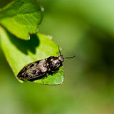 Macro of a bug Royalty Free Stock Photo