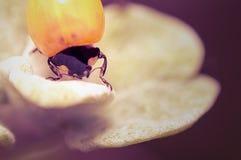 Macro of a bug Royalty Free Stock Photos