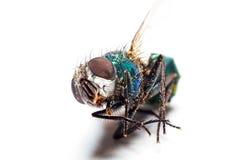 Macro of a bug Stock Photos