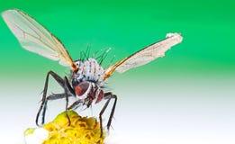 Macro of a bug Stock Photo