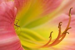 Macro bug Stock Images