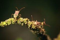 Macro of bug. Stock Photo