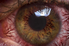 Macro bulbo oculare rosso Fotografie Stock