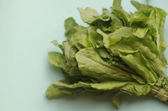 A macro bunch of green fresh sorrel on the blue background. Healthy food, raw and vegetarian Stock Photo