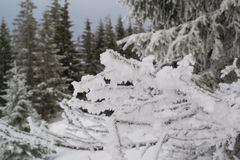Macro bush covered with snow high in the mountains Royalty Free Stock Photo
