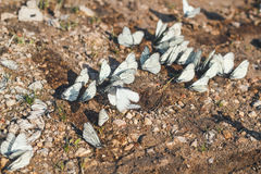 Macro butterflies. On the ground Royalty Free Stock Images