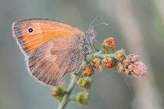 Macro butterfly Stock Images