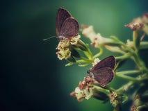 Macro. Butterfly macro flora fauna landscape Royalty Free Stock Photography
