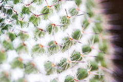 Macro of cactus Stock Photos