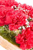 Macro of carnation Stock Images
