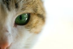 Macro of a cat with green eyes Royalty Free Stock Photography