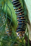 Macro of a caterpillar Royalty Free Stock Images
