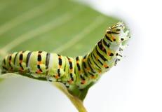 Macro of caterpillar on leaf Royalty Free Stock Photos
