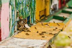 Macro cercana para arriba de abejas del vuelo delante de la colmena colorida de madera Pelotón grande del enjambre de abejas en d Fotos de archivo