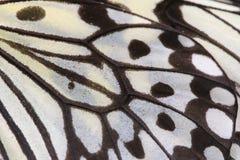 Macro cercana para arriba de un ala grande de la mariposa de las ninfas del árbol Foto de archivo libre de regalías