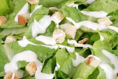 Macro cesar salad Royalty Free Stock Photography