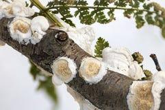 Macro champignons et fougère Image libre de droits