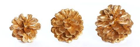 Macro chapeado ouro dos cones do pinho isolado Imagens de Stock Royalty Free