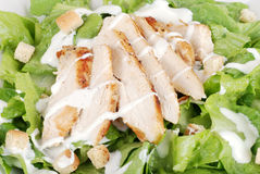 Macro of chicken cesar salad. With croutons Royalty Free Stock Photos