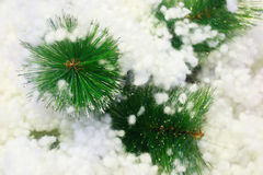 Macro christmas tree with snow background Royalty Free Stock Image