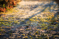 Macro close-up of backlit frosty path Royalty Free Stock Photo
