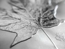 Macro close up of a pure Silver Bullion coin stock images