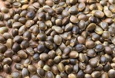 Macro Close Up of Cannabis Hemp Seeds stock photo