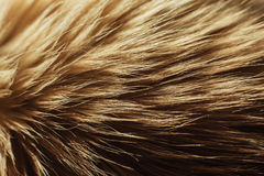 Macro close up on a cat's fur Stock Images