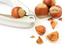Macro close-up of cracked brown hazelnut on white background. Stock Photo