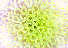 Macro Close up on Dahlia Flower Center Stock Image