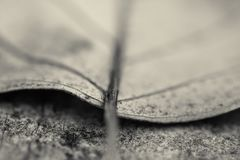 Macro close up of detail dead leaf lying on the floor in black and white. Background Stock Photo