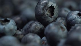 Macro close up of fresh tasty blueberry or delicious blueberries in the sunlight extreme close up. stock video footage