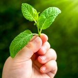 Macro close up of infants hand holding leaf. Royalty Free Stock Photography