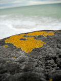 Macro close up of lichen on wooden pier with blurred horizon. Stock Photography