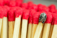 Macro close up of Red headed matches and one burnt Stock Image